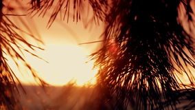 Branches of trees at sunset stock video footage