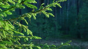 Branches of trees swaying in the wind in the forest. stock footage