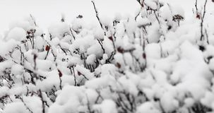 Branches of trees under the snow.  stock footage