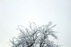 Branches of trees under snow textured winter forest Royalty Free Stock Images