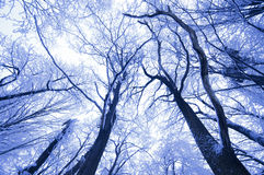 Branches of trees in winter in frozen forest Stock Photos