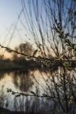 Branches troubles au coucher du soleil Images libres de droits