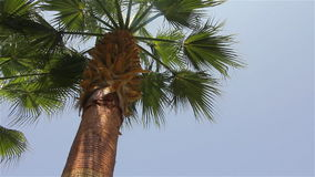 Branches and trunk of a palm tree. Palm tree trunk and leaves over a blue sky stock video