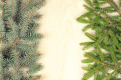 Branches of two varieties spruce on a wooden background Stock Photos