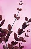 branches tyg Royaltyfri Fotografi