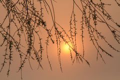 Branches under the setting sun. Eastphoto, tukuchina, Branches under the setting sun royalty free stock photography