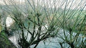 Branches vertes photos libres de droits