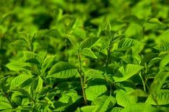 Branches vertes avec de nouvelles feuilles Image stock