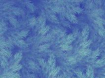 Branches vertes bleues d'un fourrure-arbre, d'un sapin ou d'un pin avec le copyspace ENV 10 illustration libre de droits