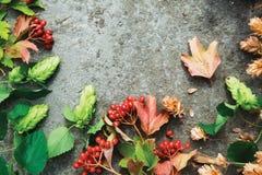 Branches vertes d'houblon et de baies rouges de viburnum sur le béton Images stock