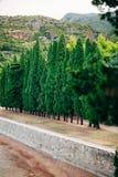 Branches vertes de cyprès Images stock
