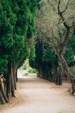 Branches vertes de cyprès Photographie stock