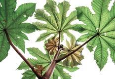 Branches vertes de la fleur des espèces d'une paume du fond u Image stock