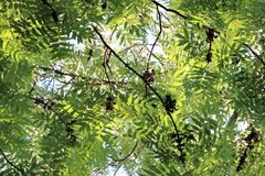 Branches vertes des arbres Photo stock