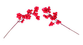 The branches of viburnum Royalty Free Stock Photography