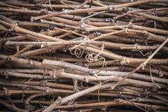 Branches of the vine collected in sheaf. Gavilla de sarmientos. Ramas de la vid recogidas en gavilla. Ramas de la planta de la vid Royalty Free Stock Photo