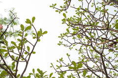 Branches Stock Photography