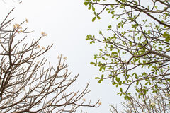 Branches Stock Photo