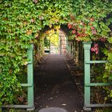 Branches virginia creeper ramble on archway Royalty Free Stock Images