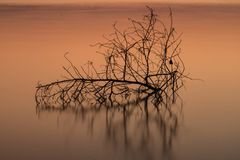 Branches in the water, a reflection. Beautiful. Royalty Free Stock Photos