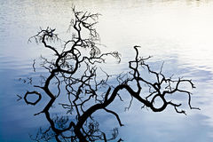 Branches in water Royalty Free Stock Photos