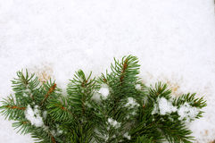 Branches were eaten on snow with a close up. Green prickly branches were eaten on snow Stock Photography
