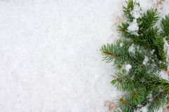 Branches were eaten on snow with a close up. Green prickly branches were eaten on snow Stock Images