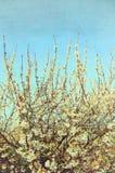 branches white Arkivbild