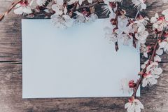 Branches of white flowers - apricots and yellow stamens on the background of old boards. Place for text. The concept of spring has royalty free stock photography