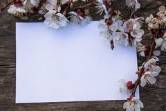 Branches of white flowers - apricots and yellow stamens on the background of old boards. Place for text. The concept of spring has stock photos