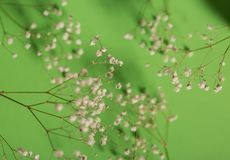 Branches of white flowers on green background stock photography