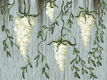 Branches with white flowers. Hanging branches with white flowers and small leaves on gray wood texture background Royalty Free Stock Photo