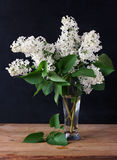 Branches of white lilac on a black background. Royalty Free Stock Photography