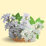 Branches of white lilac in a small straw basket vector illustration