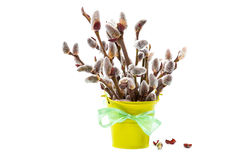Branches of willow blossoming in a bucket. Stock Images