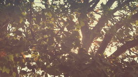 Branches in wind with glitter Sun flare stock video