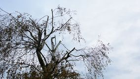 Branches in wind stock footage