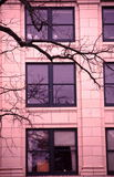 Branches and windows Stock Photography