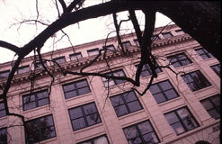 Branches and windows Royalty Free Stock Photography