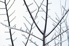 Branches in the winter Royalty Free Stock Photography