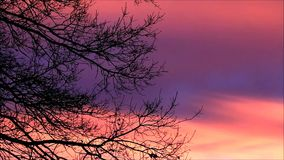 Branches in winter against red clouds stock footage
