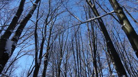 Branches of winter forest against blue sky stock video
