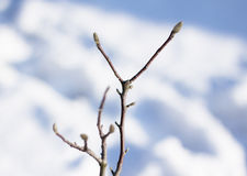 Branches in winter on a snowy background Stock Photography