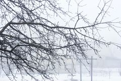 Branches of a winter tree. Branches without leaves. White winter.  royalty free stock image
