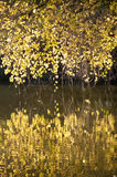 Branches With Fall Colors Royalty Free Stock Photography