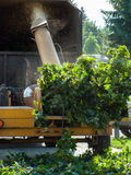 Branches in a Wood Chipper Stock Images