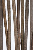 Branches, wooden stick Stock Photo