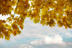 Branches of yellow autumn leaves Stock Image