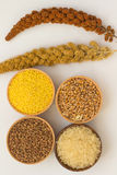 Branches of yellow and red millet, rice and  buckwheat Royalty Free Stock Photography
