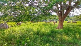 Through the branches, you can see life on the farm. Royalty Free Stock Images